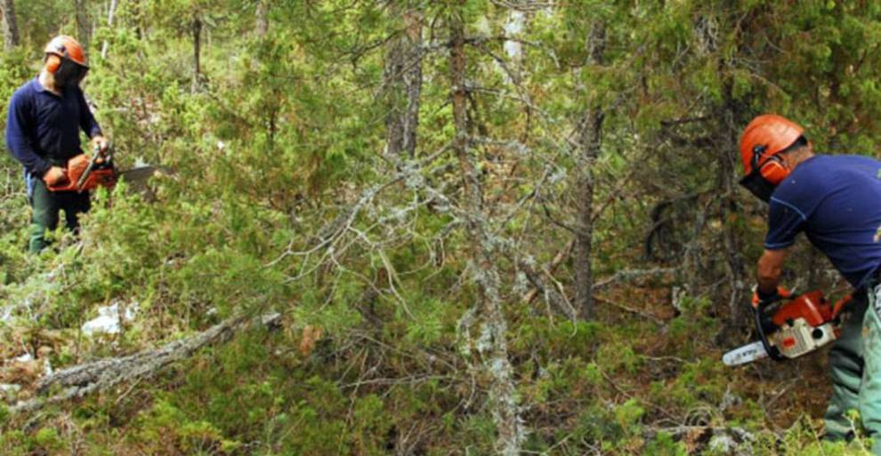 Personal de Novaterra realiza trabajos de limpieza forestal para CC.OO.