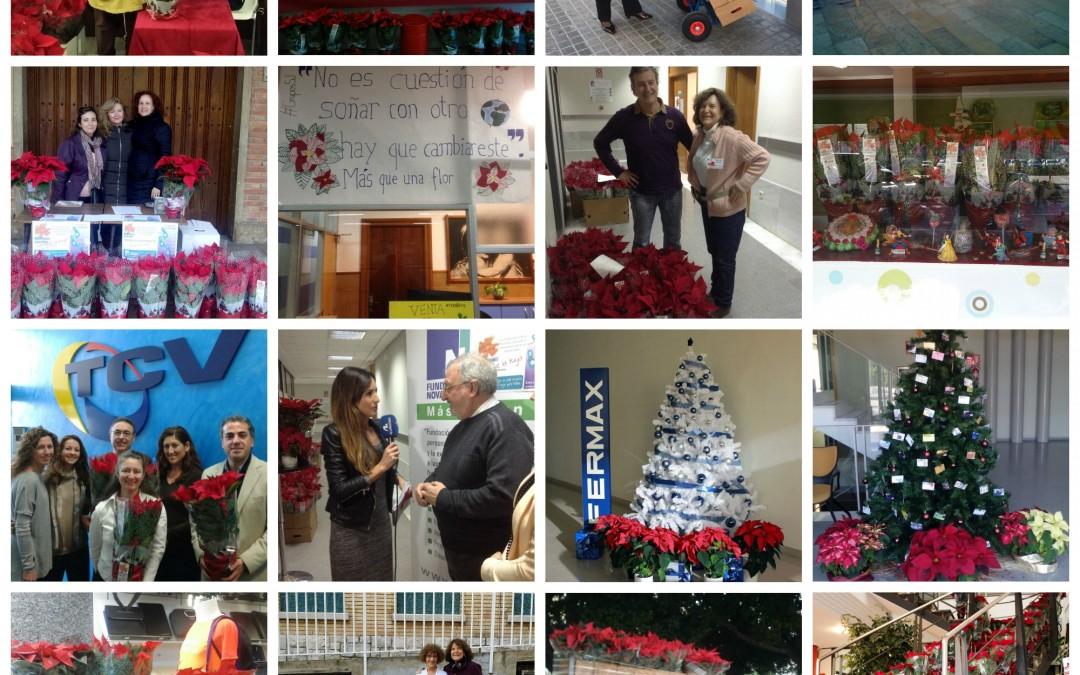 12.000 Flores de Pascua Solidarias