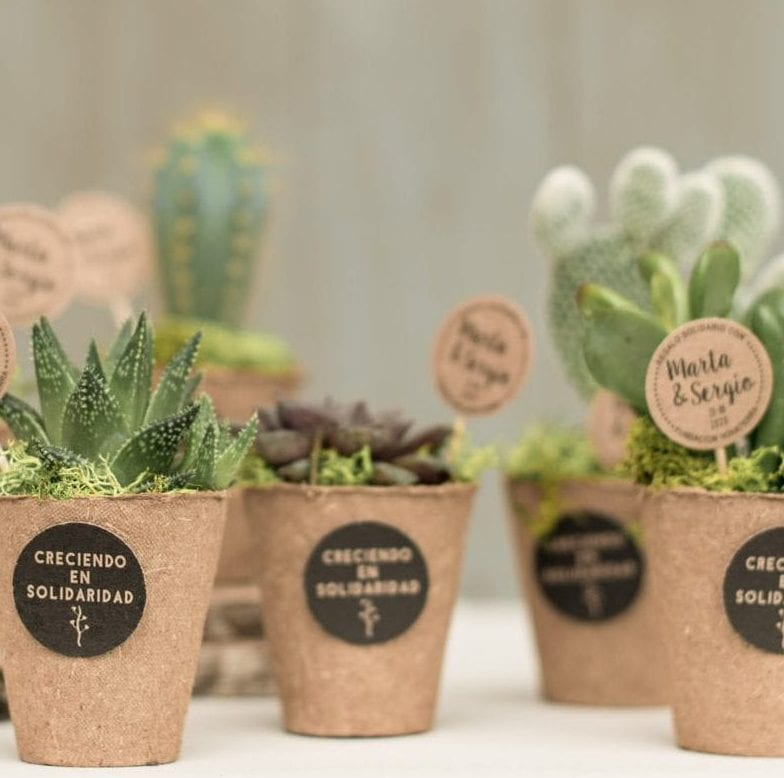 Mini cactus y crasas solidarias
